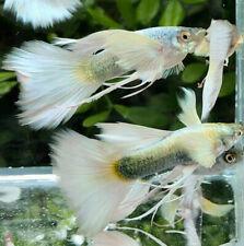 Live Aquarium Fish | eBay