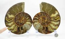 "3723 Cut Split PAIR Ammonite Deep Crystal Cavity 110myo Fossil 82mm Large 3.2"""