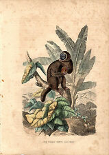 Cassell'S Mammals - The Woolly Lemur - 150 Years Old Wood Engraving
