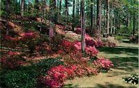 Atlanta GA Azaleas and Dogwood Spring Postcard unused (16673)