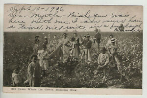 1889. -  Down Where the Cotton Blossoms Grow. 1906 Blk & White Card
