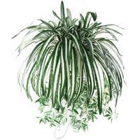 HN- 1Pc Chlorophytum Comosum Faux Greenery Hotel Decor Artificial Spider Plant N
