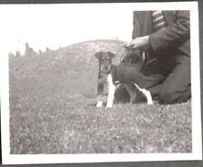 VINTAGE PHOTOGRAPH 1930S WIRE HAIR FOX TERRIER DOG PUPPY POSING OLD MEXICO PHOTO