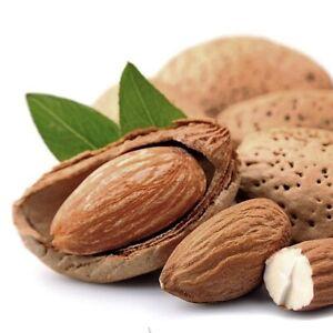 Almond tropical Fruit Tree Nut Mollar de Tarragona Varieties Hard Shell