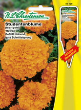 Studentenblume Hawaii orange gefüllt blühend Schnittblume Tagetes erecta 50126