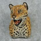 #12919 E | Reproduction Jaguar Shoulder Taxidermy Head Mount - Lion Safari