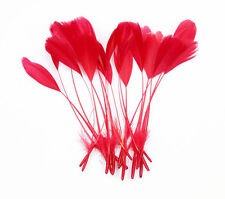 """10 pcs Stripped Coque Feathers Millinery and Crafts 5-7""""  RED"""