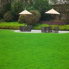 1000Pcs lawn grass seeds (Zoysia Tenuifolia) Fast grow Grass Seed Perennial