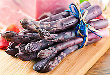 25 2-year Purple Passion Asparagus Plants -Sold Out- Pre-Order for Spring 2018