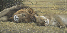 LION ART PRINT - Lion and Lioness by Adam Smith Safari Wildlife Poster 14x26