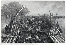 Antique print Hopo Herding Animals into Trench / african Hunting Africa / zebra