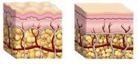 Collagen Powder 15 gm Hydrolyzed Bovine Protein Firm Bone 100% Diy Ingredient