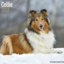 Collie Calendar 2021 Premium Dog Breed Calendars