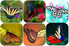 BUTTERFLY DRINK COASTERS X6