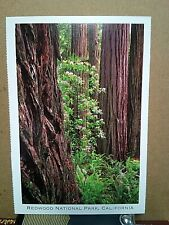 REDWOOD NATIONAL PARK California NATIONAL RESOURCES DEFENSE COUNCIL Carr Clifton