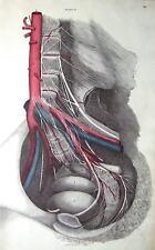 La femelle bassin Lizars originale main couleur antique Anatomy Print c1825