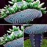 50PCS New Fashion Super Rare African Cactus Succulent Plants Bonsai Seeds Best