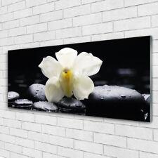 Glasbilder Wandbild Druck auf Glas 125x50 Blume Steine Pflanzen