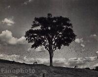 1958/72 Vintage 11x14 NEWTOWN Cows Clouds Birds Landscape Photo By ANDRE KERTESZ