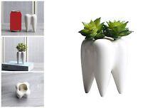 Desktop Ceramic Succulent Flower Pot Tooth Shape Modern Design Mini Planter Pots