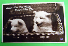 Dog Unposted Pre - 1914 Collectable Postcards