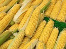 Sweetcorn Mainstay -  30 seeds - Vegetable