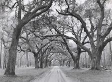 PHOTO ART PRINT - Oak Arches by Jim Morris 44x32 Huge Oversize Poster