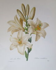 P.J. Redoute # 76 Lilium candidum vintage print