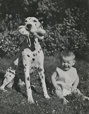 Dalmatian Dog Steals Baby'S Toy Vintage 50 year-old Full Page Photo Print