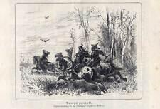 Falknerei-Falkner-Jagd-Pferde - Holzstich 1882