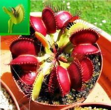 WOAU 10pcs Venus Fly Trap Flower Seeds Dionaea Muscipula Giant Clip Garden Plant