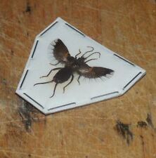 Spreadwing Dermaptera Sp 01. Earwig Real Insect Indonesia Taxidermy