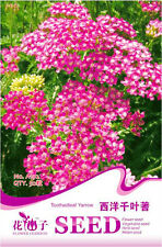 Original Package 50 Toothed Leaf Yarrow Seeds Achillea Millefolium Flowers A192