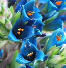 SAPPHIRE TOWER Puya alpestris 10 SEEDS exotic* unusual *eye catching* CombSH C64