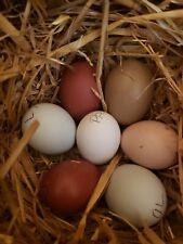 5+ Hens Choice Fertile Hatching Eggs.Npip Certified Ai clean
