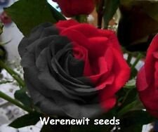 EXOTIC RARE RED/BLACK YUANYANG ROSE SEEDS x 20, AUSSIE SELLER DONT MISS OUT