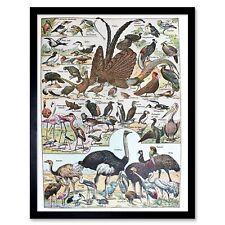 Scientific Birds Identification Ostrich Penguin Flamingo 12X16 Inch Framed Print