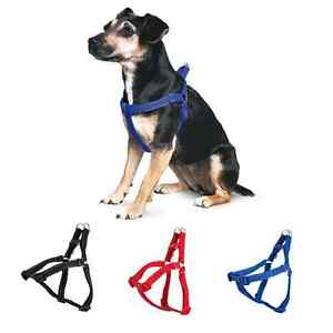 Ancol Padded Exercise Dog Harness - 3 Colours and 4 Sizes