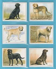 DOGS - IMPERIAL PUBLISHING LTD. - SET OF L6 DOGS CARDS -  LABRADOR  RETRIEVERS