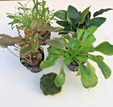 5 stk Vordergrund Set Wasserpflanzen Sortiment Aquarienpflanzen Wasserpflanzen