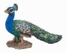 Miniature World peacock