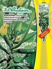 Zucchini 'Black Forest' F1 - Cucurbita pepo, Kletterzucchini Samen 40393