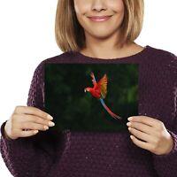 A5 - Macaw Bird Tropical Jungle Print 21x14.8cm 280gsm #2770