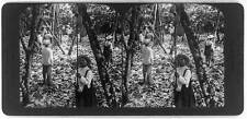 Photo of Stereograph,Where Chocolate comes fro,Cacao Pods,Ecuador,c1907,Harvest