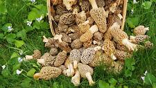 Morel Mushroom Spores in Sawdust Bag Mushrooms Spore Grow Kit Makes 20 Gallons