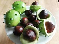 3 x decoración de grandes frutos fresas muñecos decoración arte frutas fondue