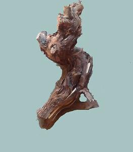 1 Original Rebstock Köpfe zum dekorieren u. Basteln tolle Trockengesteck Träger