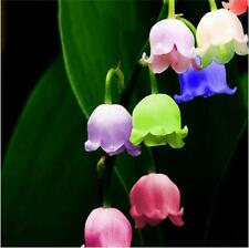 120 seeds of bell orchid Windbell flowers bonsai blue purple red green