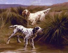 ENGLISH SETTERS IN MARSHLAND WORKING GUNDOG DOG FINE ART PRINT by Thomas Blinks