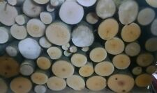 Birch Wood Logs for BBQ/Grilling/Wood Smoking! Arts and Crafts14lbs-17lbs